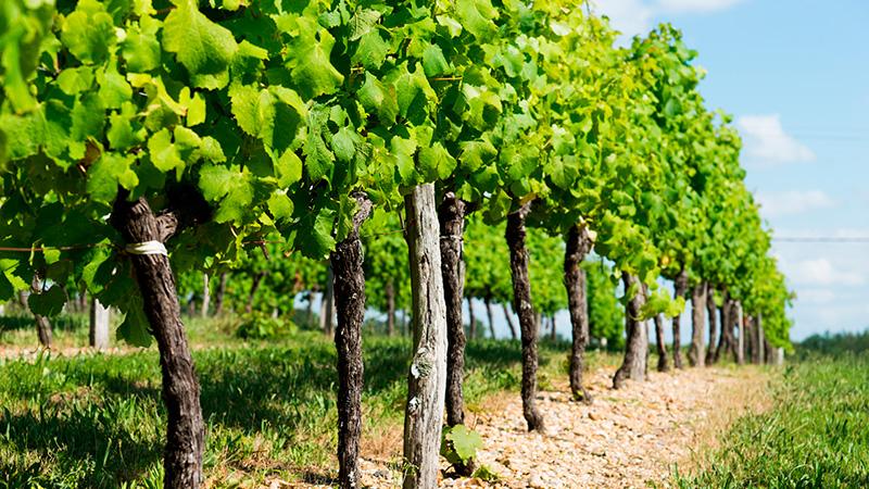 medeville collection bordeaux, bordeaux vignobles